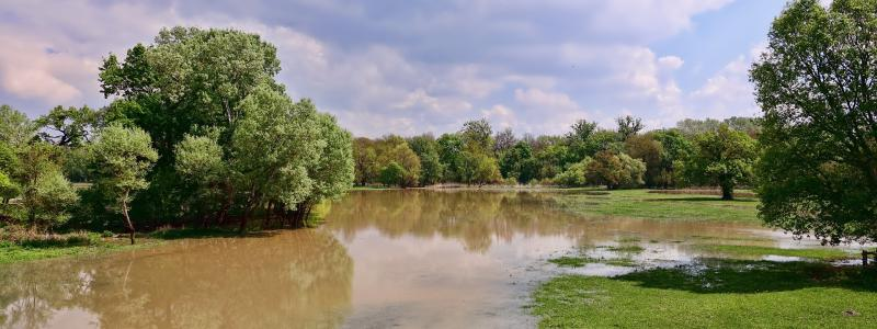 Image of a flooded field