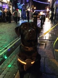 Image of drug sniffer dog Roscoe